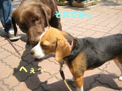 IMG_3774_sh01.jpg