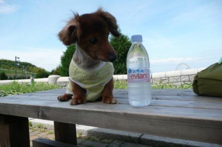 お水は必需品ですよ(^_^)v