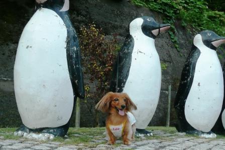 ペンギンさんと♪