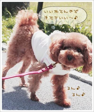 お散歩 行って来るよ~!