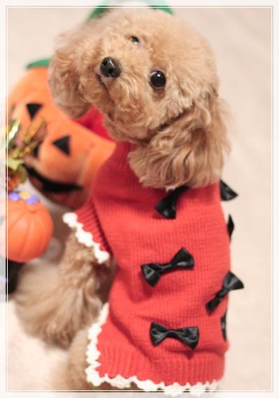 かぼちゃに変身