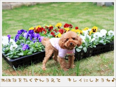 お花でいっぱいにしよ~