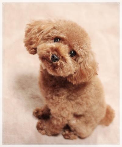 フワフワの別犬です
