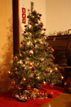 081130 tree1