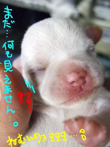 2006-12-28-choujyo.jpg