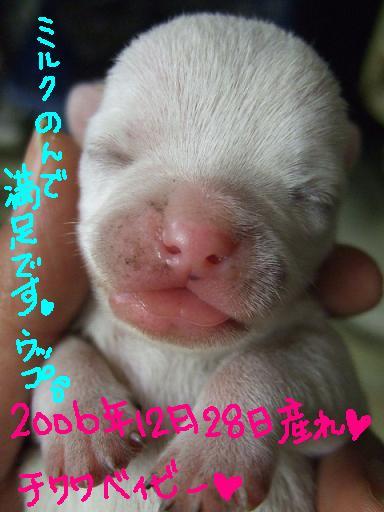 2006-12-28-jijyo.jpg