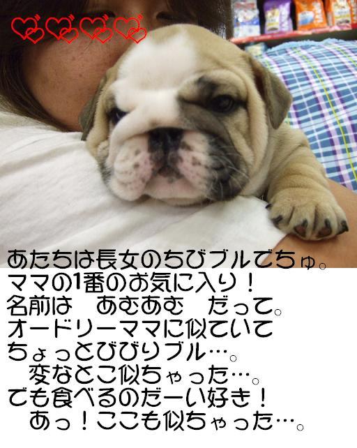 chibi-buru-choujyo-1.jpg