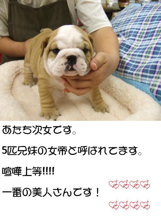 chibi-buru-jijyo-1.jpg