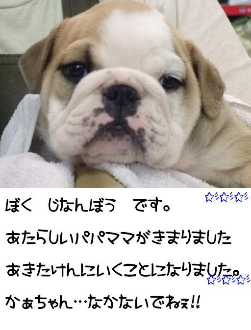 chibi-buru-jinan-1.jpg