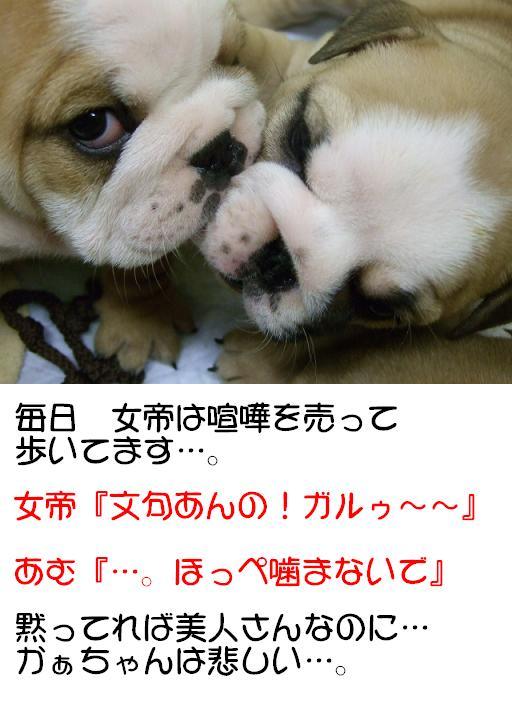 chibi-buru-tatakai-1.jpg