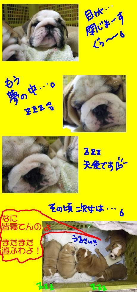 chibi-buru-zzz-1.jpg