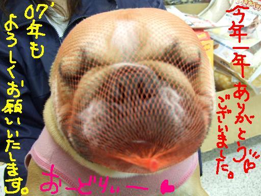 oiyo-m-4.jpg