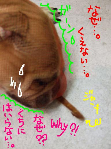 oiyu-m-3.jpg