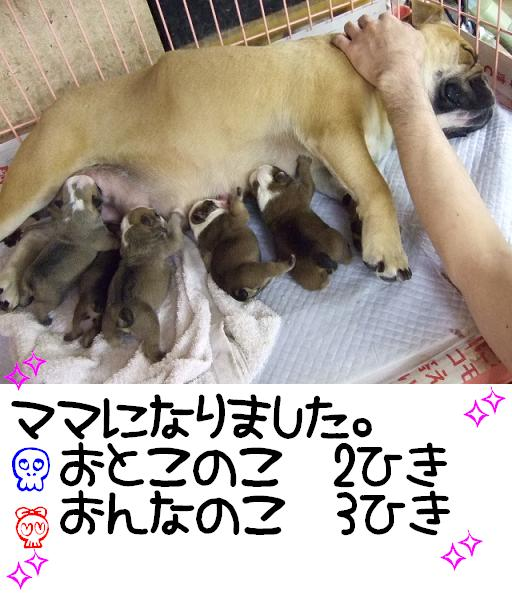 ojyo-mama-1.jpg