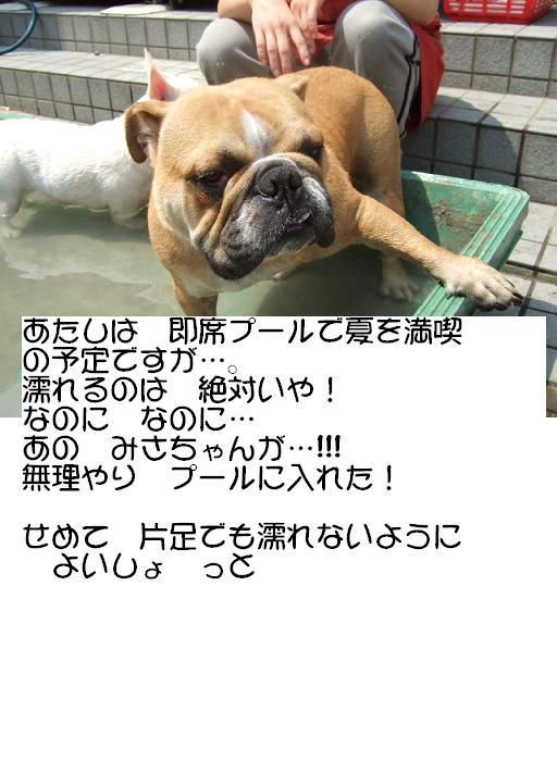 ojyo-pu-1.jpg