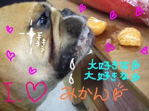 ojyu-m-2.jpg