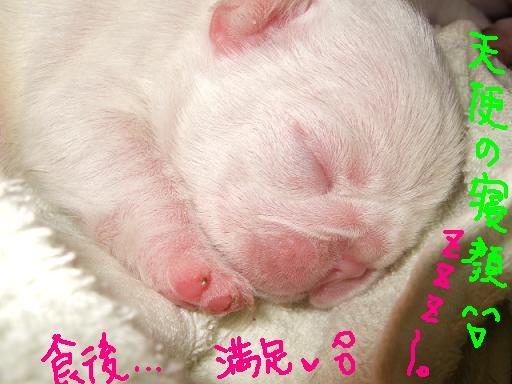 seko-2007-choujyo-1.jpg