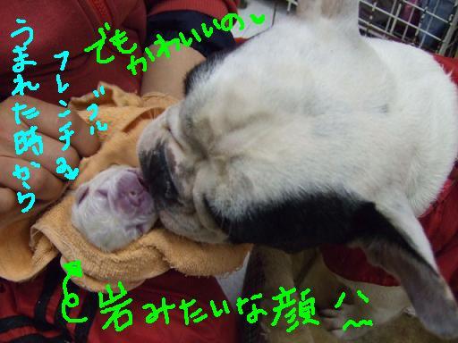 seko-shu-3.jpg