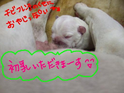 seko-shu-4.jpg