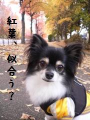 11-30koyo-dーb