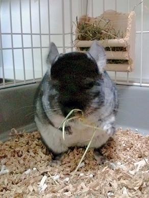 見て見て!ボク牧草食べてるよ☆