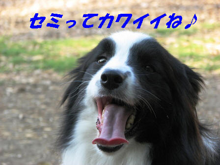 semisuki