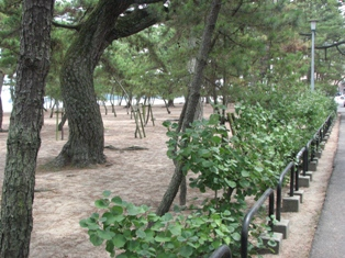 琴林公園2