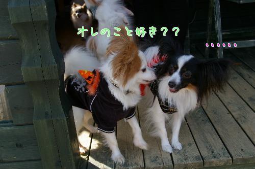 hn7RKq4l_20091019211408.jpg