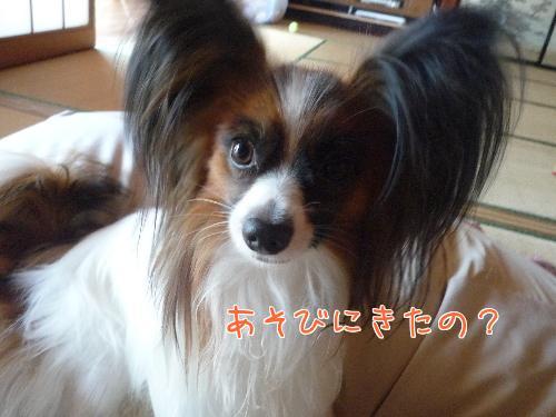 nCc8i7_p_20091003201050.jpg