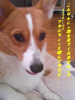 SBSH0182_convert_20090531001009.jpg