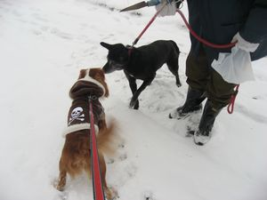 IMG_4444黒犬
