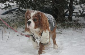 IMG_4473雪