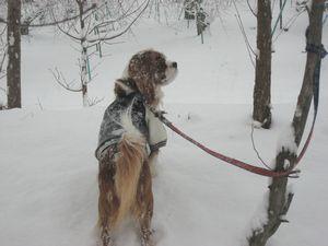 IMG_4477雪