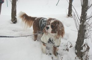 IMG_4479雪