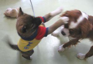 IMG_4519子犬