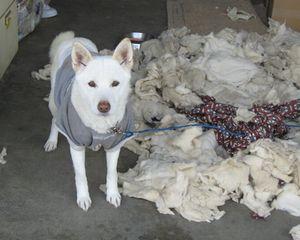 IMG_4525飼い犬