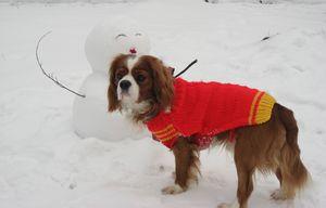 IMG_4605雪だるま