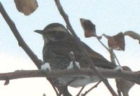 IMG_4695小鳥