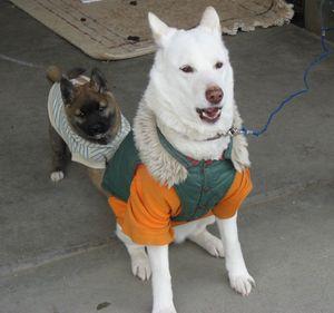 IMG_4701犬達