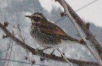 IMG_4729小鳥
