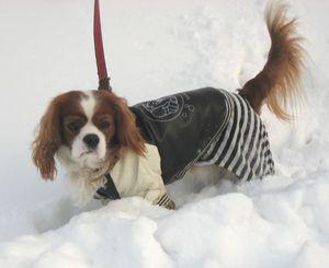 IMG_4746雪