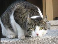 IMG_4873猫