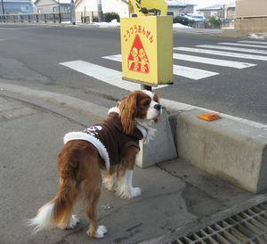 IMG_4874交通安全
