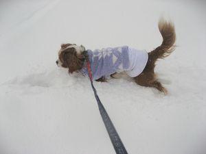 IMG_4884雪