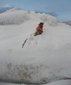 IMG_4899雪山