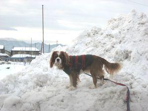 IMG_4903雪山