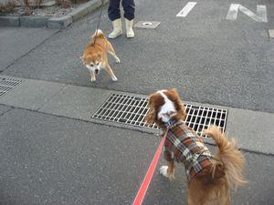 IMG_5066柴犬