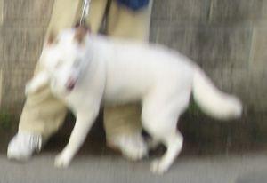IMG_5326犬
