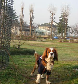IMG_5337公園