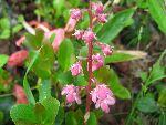 IMG_6685高山植物